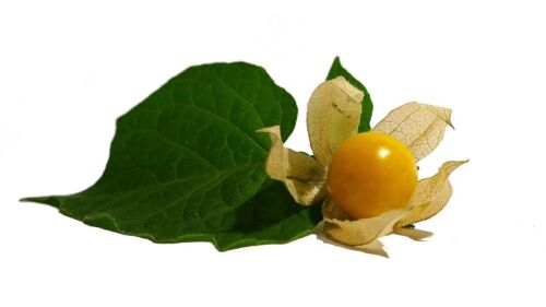 100 Ground Cherry Fruit Seeds | Pineapple Cape Gooseberry (Physalis Ixocarpa)