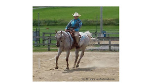 Virtual Western and Traditional Dressage Horse Show