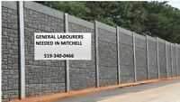 General Labourers needed in Mitchell- 519-340-0466