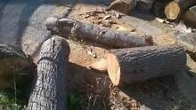 Free FIREWOOD pick up only ROSEHILL Parramatta Area Preview