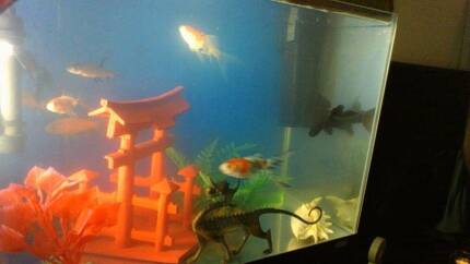 20 Lt Fish Tank with Everything good to go. Surfers Paradise Gold Coast City Preview