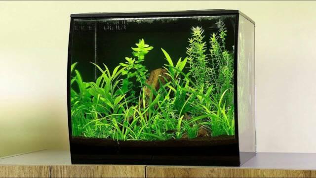 Fluval Flex 34 Litre Aquarium Fish Tank with Led light ...