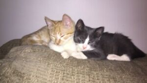 kittens for sale **must stay together**