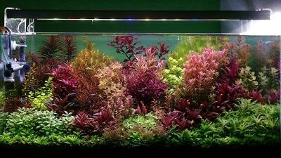 live aquarium plants 34 Stems Cuttings! Colorful And Great Variety!!
