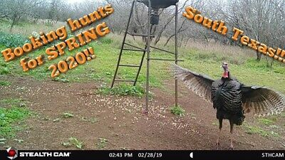Spring Gobbler Season Pa 2020.Hunting Trips Leases Turkey Hunt