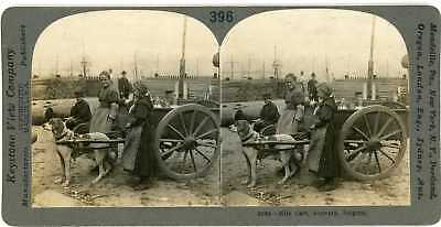 Stereoview Belgium ANTWERP Young Girls Dog Drawn Milk Cart 2084 ve396a fx