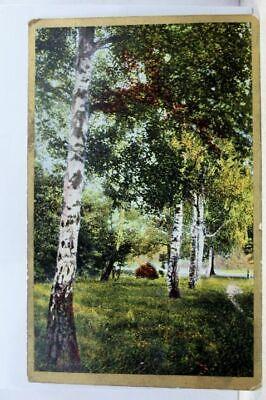 Art Park Trees Path Lake Postcard Old Vintage Card View Standard Souvenir Postal