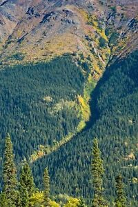 SNOW CREEK Placer Gold Claim for Sale $20,000/obo Prince George British Columbia image 6