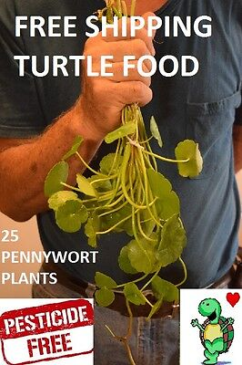 25 Pennywort Stems Live Plants Turtle Herp Food Organic No Chemicals