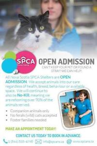 SPCA is Open Admission