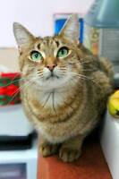 Gorgeous, affectionate spayed female!