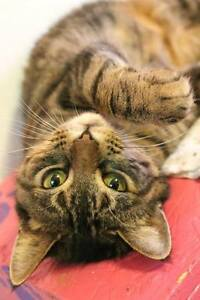Gentle, affectionate, spayed female.