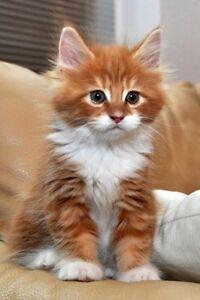 Kitten Please!!!