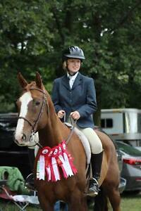 Wanted Co-boarder - Horse Cambridge Kitchener Area image 2