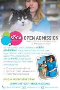 SPCA is now Open Admission