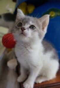 Rescue kitten-Hunter Valley Cat Haven Kurri Kurri Cessnock Area Preview
