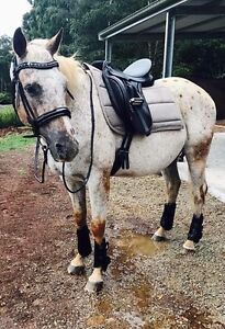Project Horse for sale Monbulk Yarra Ranges Preview