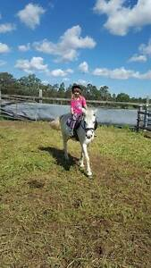 Sweet aged pony mare SOLD pending Lochinvar Maitland Area Preview