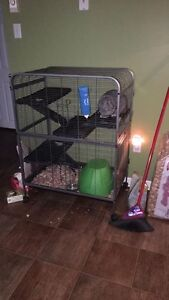 Bunny and huge cage