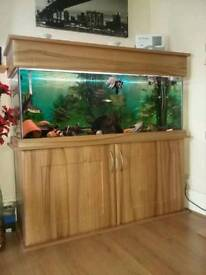 4ft fish tank and all accessories