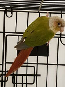 Found Conure Highbury/Huron