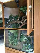 Reptile Tanks Taringa Brisbane South West Preview