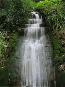Nature Sounds Forest Relaxing-Natural Soothing Sound Waterfall Bird Song CD M158