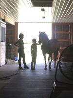 Stable Help for Horse Stable - Paisley/Chesley Area