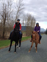 horse lease available
