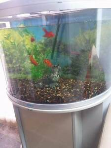 Jebo 160 L half circle fish tank / aquarium Meadow Heights Hume Area Preview