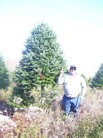 Fresh Nova Scotia Christmas Tree For Sale and Delivery!!