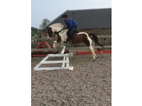 13.2hh 13yo Second Pony For Sale