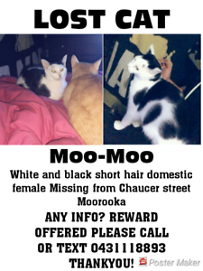 LOST CAT REWARD OFFERED