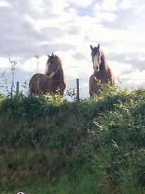 Livery & equestrian facilities central to Carrick and Newtownabbey