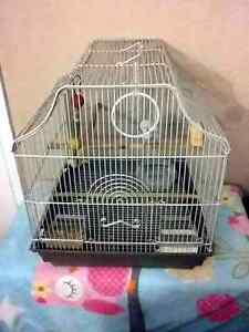 Budgie/Parakeet Starter Kit and Cage!