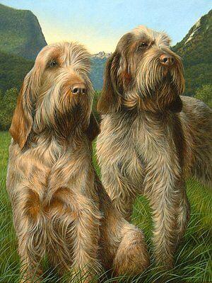 Nigel Hemming LATIN SPIRIT Italian Spinone Spinoni Gun Dogs, Limited Edition Art