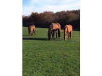 Horse Livery Available Udny/Ellon
