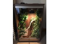 Full New Reptile Set up