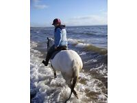 Looking for more than a weekly riding lesson? Would love a pony but don't have the time/money?