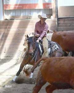 Horsemanship and Mechanical Cow Sessions at the Arena on Spurs