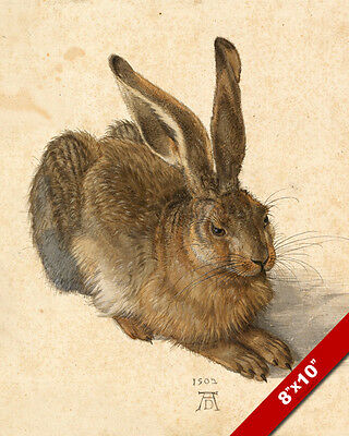 THE HARE RABBIT DRAWING WATERCOLOR PAINTING ANIMAL ART