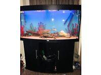 JUWEL VISION 260 Tropical fish tank complete setup