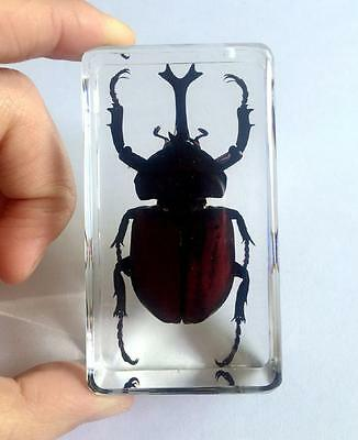 T-01 Rhinoceros Beetle Insect Specimens In Lucite Paperweight Crafts - Insect Crafts