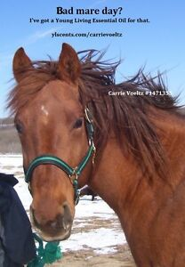 HORSE & HUMAN--Health & Emotional Wellness--SAFE & EFFECTIVE