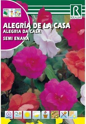 FLORES ALEGRIA DE LA CASA SEMI ENANA