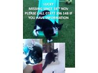 LUCKY - MISSING SINCE 18th NOV in ROSYTH