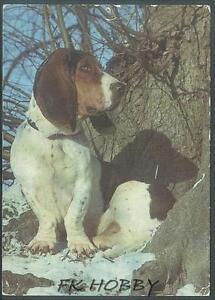 CPA Basset Dog Hund Pies Cane Perro Chiene z764 - DABROWA, Polska - CPA Basset Dog Hund Pies Cane Perro Chiene z764 - DABROWA, Polska