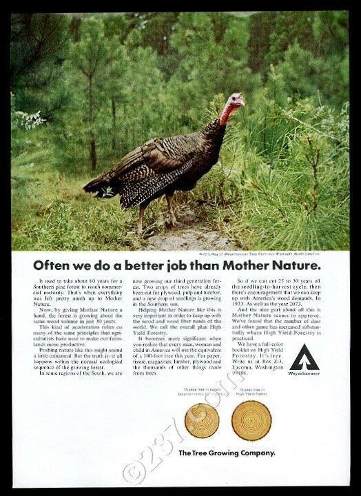 1973 wild turkey color photo Weyerhaeuser paper vintage print ad
