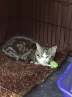 My name is Oscar-I am 4 months old, neutered & had all my shots