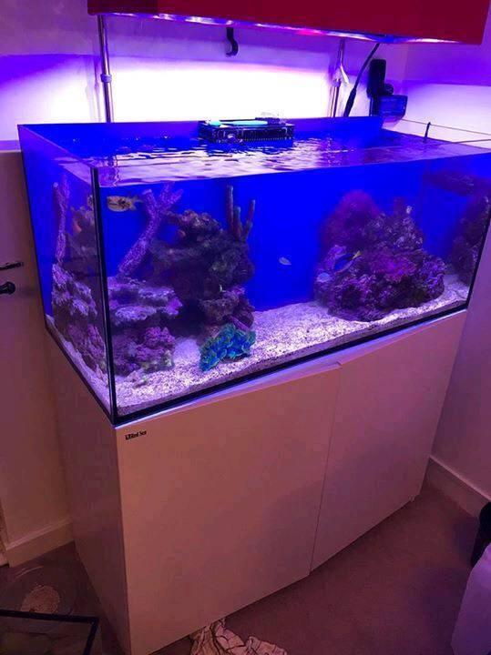 Red Sea Reefer 350 With Sump Sanrise Wifi Lights And